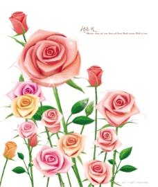 玫瑰花朵近景psd素材