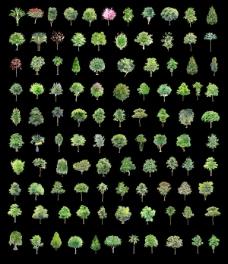 园林绿色小树木psd素材