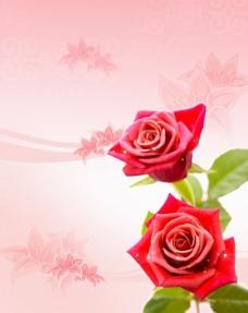 玫瑰花装饰底纹背景psd素材