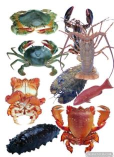 海鲜海蔘螃蟹PSD素材