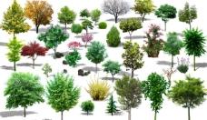 绿色树木效果图psd素材