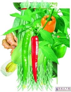 蔬菜psd源文件