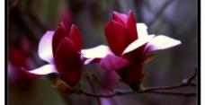 两朵小花图片