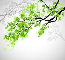 春天的树枝绿叶背景图片