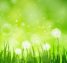 春天鲜花草地图片