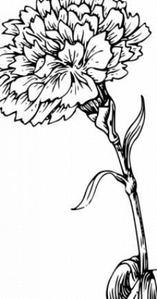 康乃馨花矢量图像