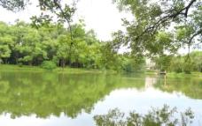 清山 绿水图片