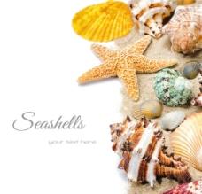 海星 海螺图片