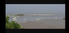 海灘水鳥視頻素材
