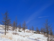 大雪迷幻图片