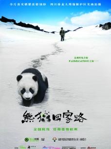 熊貓回家圖片