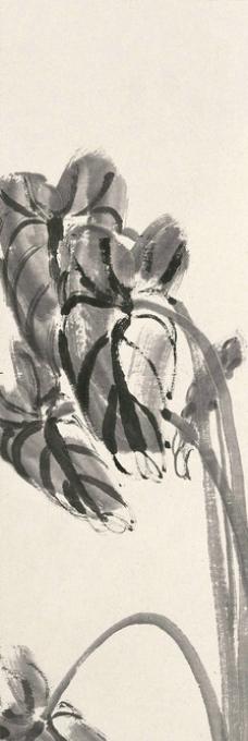 芋叶青蛙图片