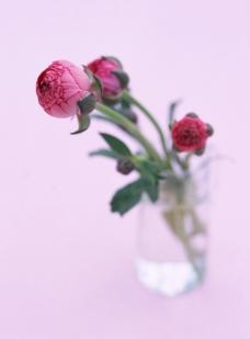 红色花骨朵图片