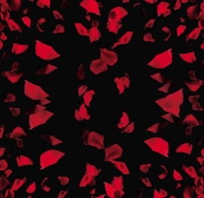 玫瑰花瓣PSD素材