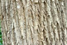 树皮纹理背景图片