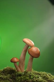 菌子特写图片