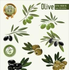 橄榄图标图片