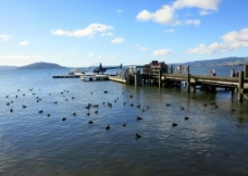 渔场码头图片