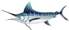 海洋生物图片