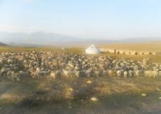 大草原 戈壁滩   羊群图片