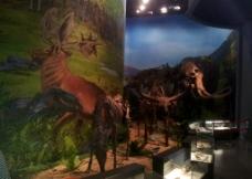鄂尔多斯博物馆古生物图片
