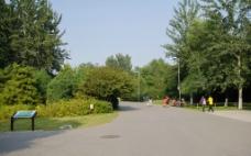 森林公园路上图片