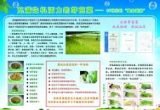 豆芽菜宣传图片
