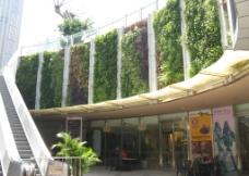 墙体绿化图片