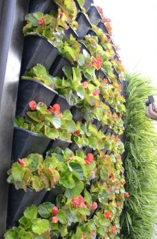垂直绿化模块图片