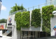 垂直墙体绿化图片