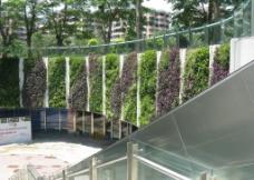 花城汇垂直绿化图片