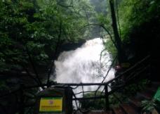 雅安碧峰峡图片