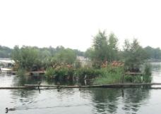 北京 后海公园 鸭子图片