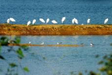 水韵鸟谱图片
