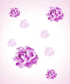 紫水晶花图片