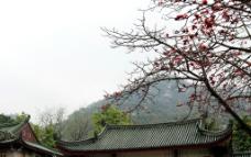 南普陀寺图片