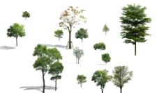 PSD格式树 常用树素材图片