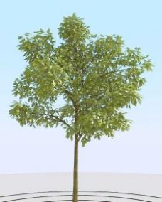 高精细橡树模型 oak 05