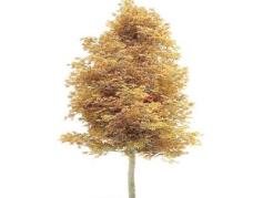 Tree 树08