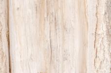 木材表面纹理21