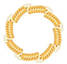 小麥 麥穗圖片