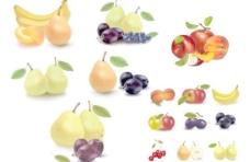 逼真的水果矢量素材