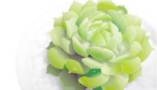 绿色植物载体材料