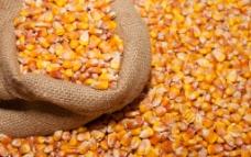 玉米粒图片