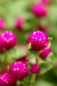 红色花朵图片