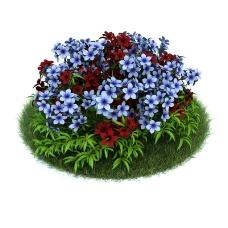 盛开的鲜花