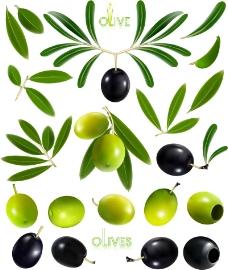 精美油橄榄和橄榄设计矢量素材